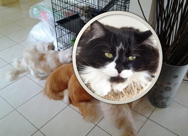 Sedih Kucing Kesayangan Mati Dalam Dakapan Anak